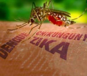 Cruces en el enfrentamiento al mosquito Aedes Aeyipti